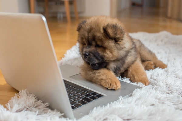 Register with the Village Veterinary Surgery