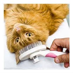 Cat Health Plans